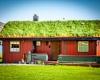 Преимущества зеленых крыш