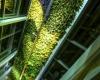 Самый высокий в мире вертикальный сад построят в Квебеке