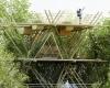 Отель-гнездо из бамбука